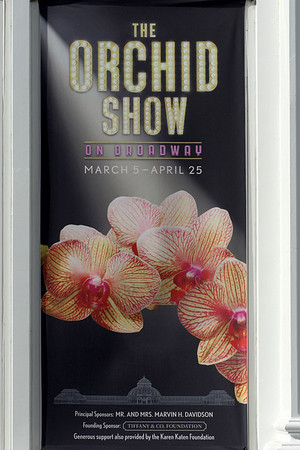 The Orchid Show - 2011