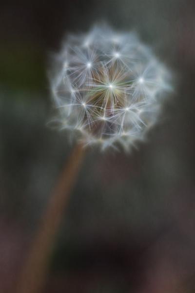windy_day-1-4.jpg