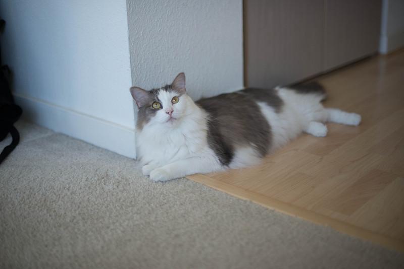 Mokono_Sloke_And_The_Kitty-5