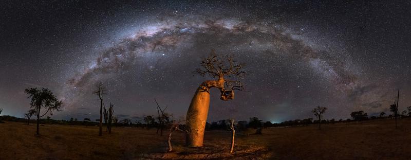 The Twisted Baobab Panorama