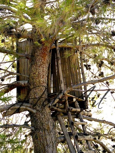 neot k  tree sukkah 1b 902.jpg