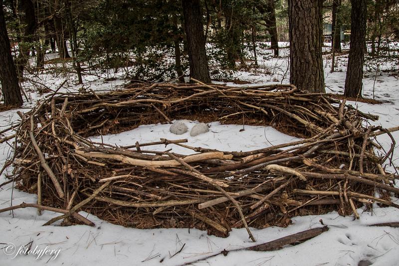 Abbott's Mill dino nest.jpg