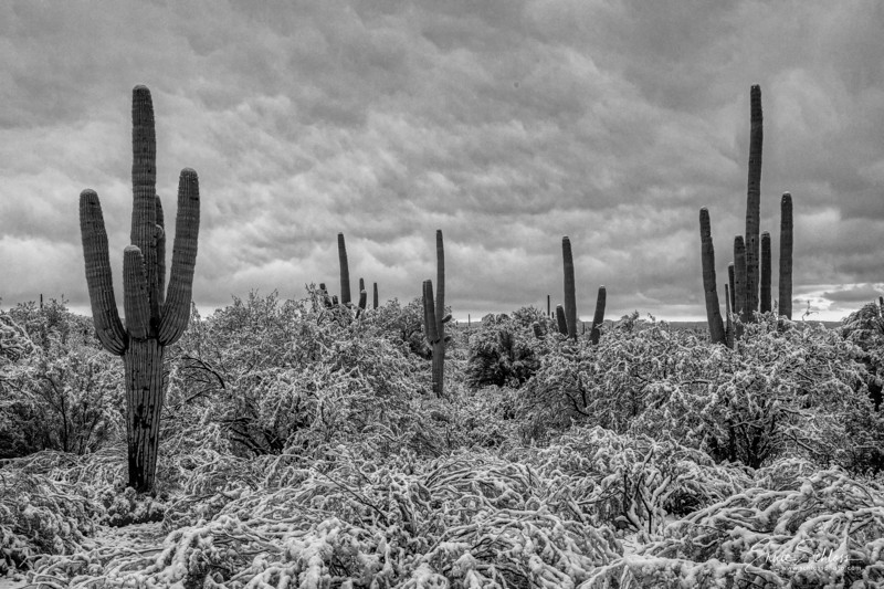 Saguaro East Snow 1-2-2019a 1-2-2019l-.jpg
