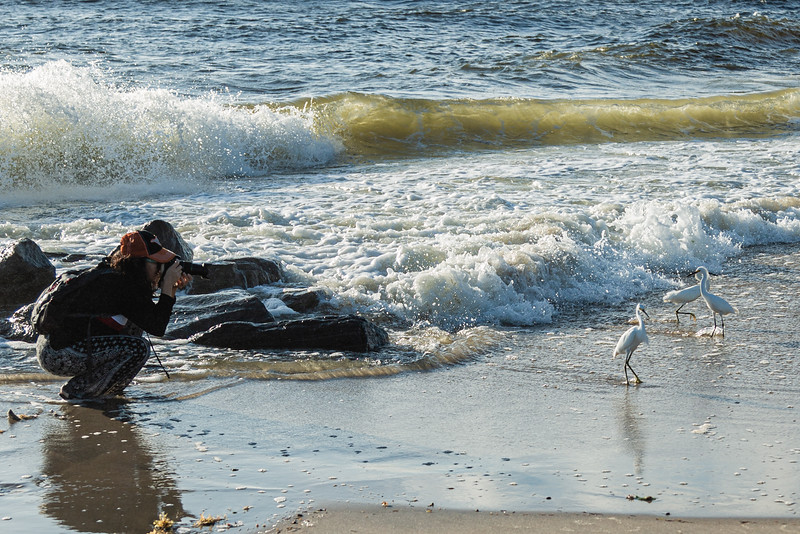 """Angie Demeter of Boynton Beach photographs snowy egrets at the shoreline of the Boynton Beach Inlet, Tuesday, October 27, 2020. Demeter just purchased her first DSLR camera and considers herself """"an amateur photographer."""" (JOSEPH FORZANO / THE PALM BEACH POST)"""
