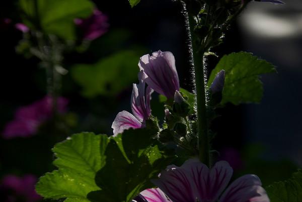 Flashly Flowers
