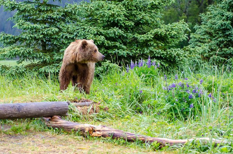 Alaska-8365.jpg