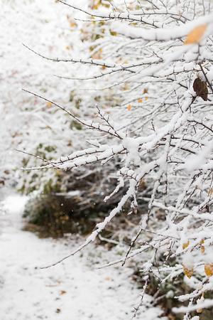 11.9.18 First Snow 18-19