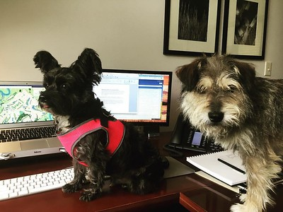Pets in the office