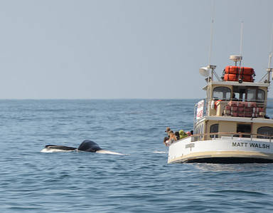 Matt Walsh Fin Whale lung 04.06.2013