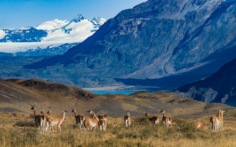 Torres del Paine (60).jpg