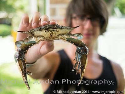 Crab Boil - 2014