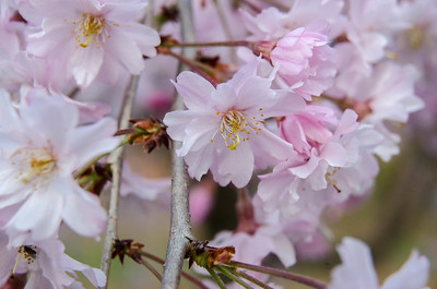 Spring (2012)