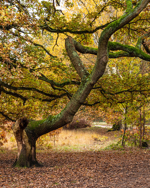 Autumn on Wimbledon Common