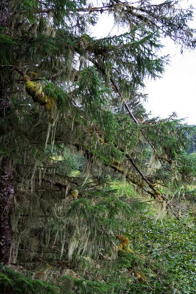 Spanish Moss 1.jpg