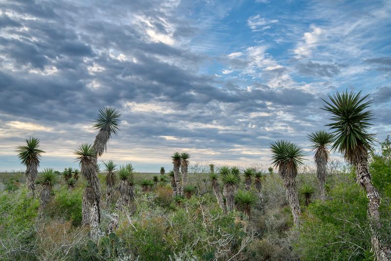 Laguna Atascosa NWR 2020-6.jpg