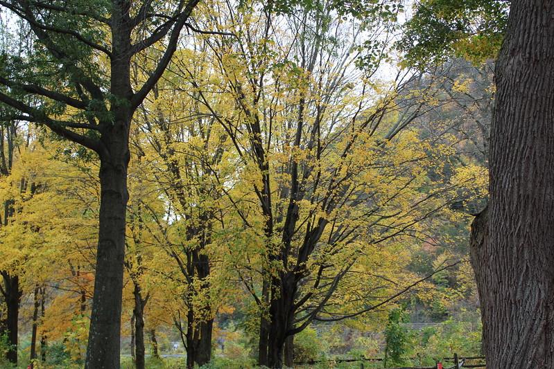 IMG_7420 Dunnfield Creek Falls (3).JPG