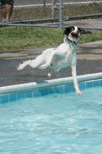 dog swim pics from JOURNAL NEWS
