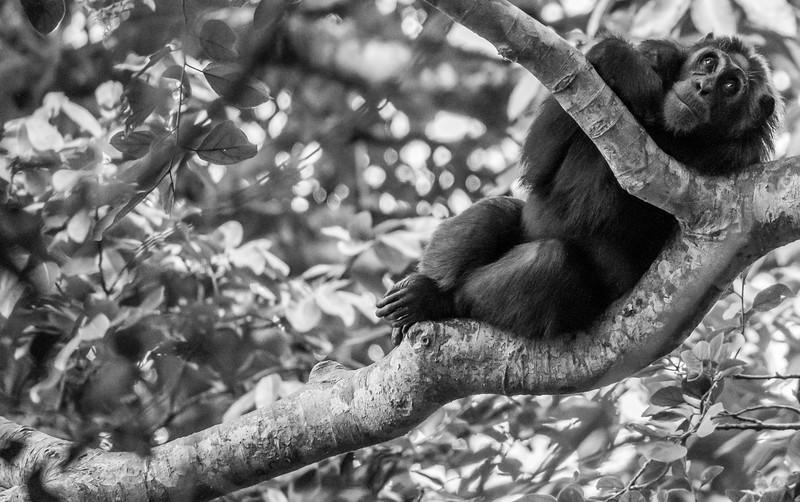 Uganda_T_Chimps-1067.jpg