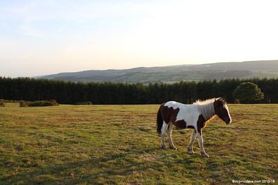 Horses - Set 5