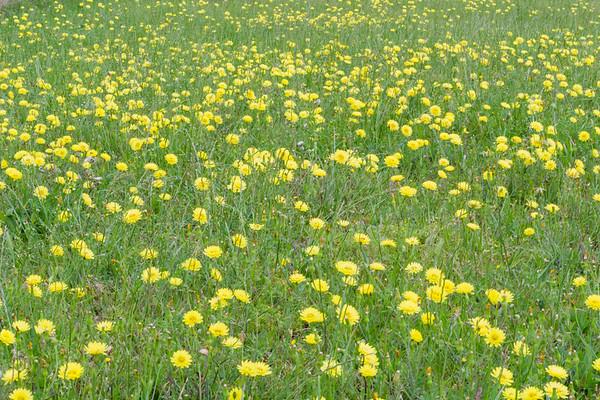 Flowers 5-3-17