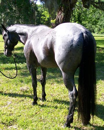 Havard Nov 2009 Sale Horses