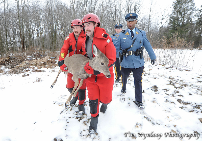 Two New Jersey State Trooper that assisted in the rescue, walk along with Harmony Township firefighters, John Latourette, left and Kyle McKenna, as they carry the doe away from the pond.