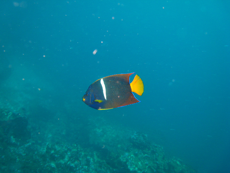 Diving in the Galapagos (240 of 392)