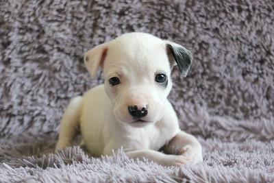 Tina's Puppies