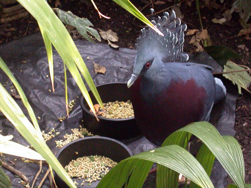 Mystery Bird, NC Zoo_25070826.jpg