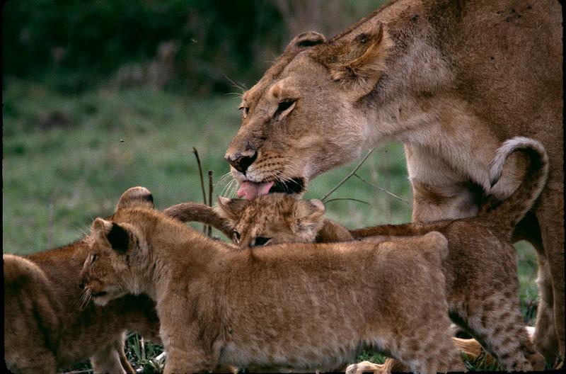 Kenya2_050.jpg