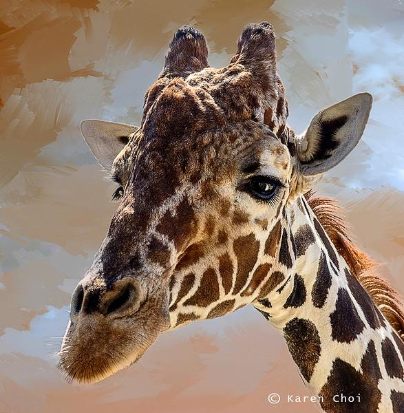 giraffe headshot small.jpg