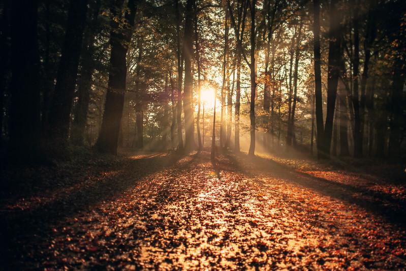park solacki autumn morning full sun looking forward brilliantlight LRG.jpg