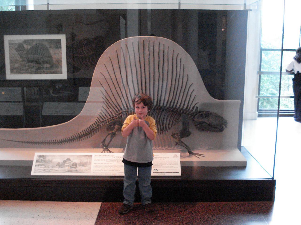 Dimetrodon, NY Museum of Natural History