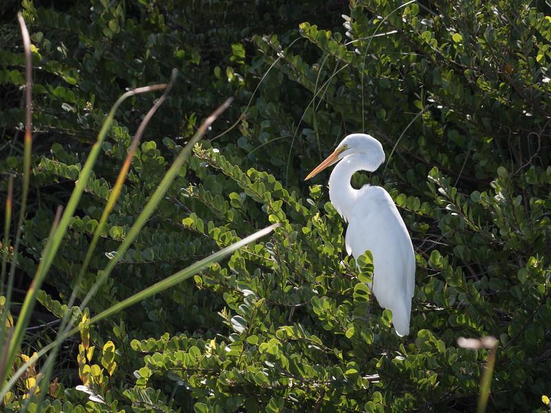 Everglades-38.jpg