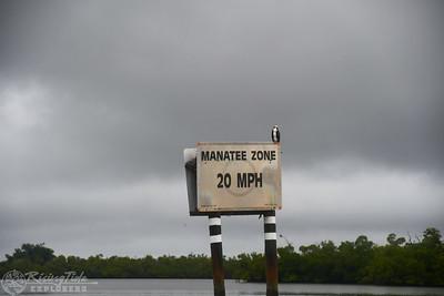 9AM Mangrove Tunnel Kayak Tour - Kramer & French