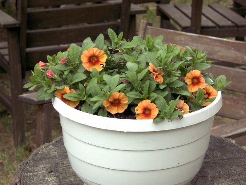 D5-Faringso Hembygdsgard flowers 2.jpg