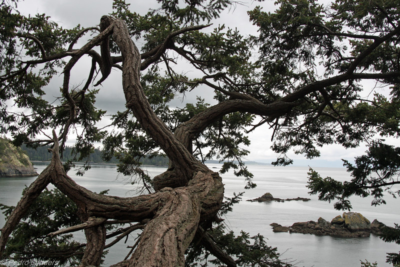 Tree and Seascape