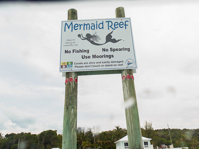 Mermaid Reef, May 14