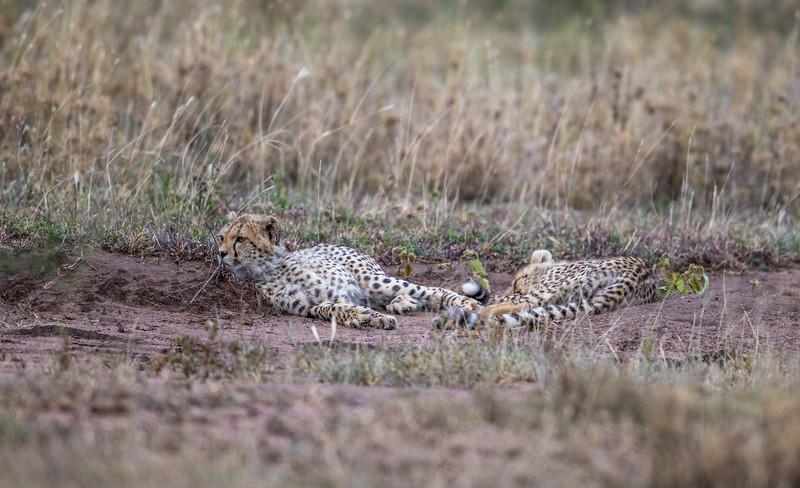 Tanzania_Feb_2018-1143.jpg