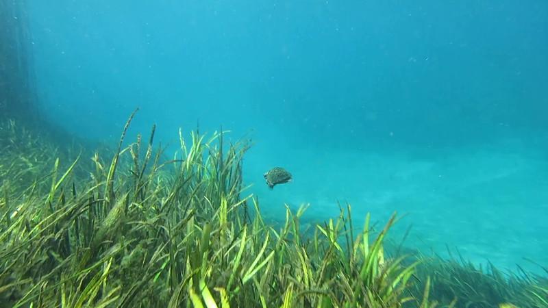turtle2.mov