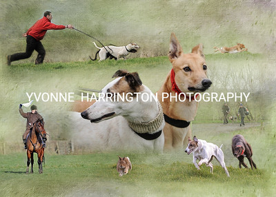 COURSING 2015