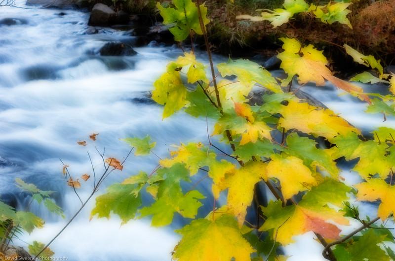 Redstone Fall Leaves.jpg
