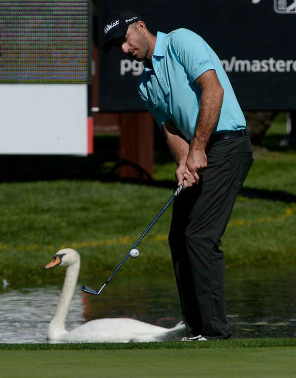. CHERRY HILLS VILLAGE, CO. - SEPTEMBER 03:  Pro golfer, Geoff Ogilvy, chips up onto the green as a swan floats around the moat during the FedExCup BMW Championship Pro-Am at the Cherry Hills Country Club Wednesday, September 03, 2014. (Photo By Andy Cross / The Denver Post)