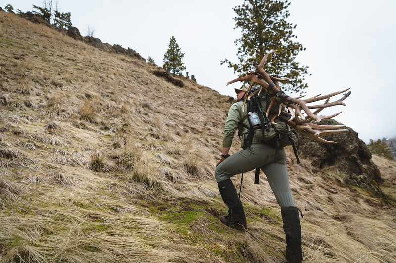 Sam Averett (samaverett) with a haul of elk antlers in Oregon.