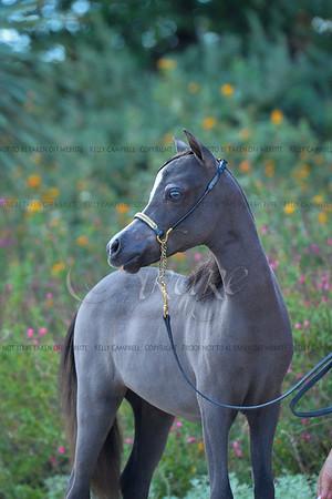 Kristina Doe Grey fillys