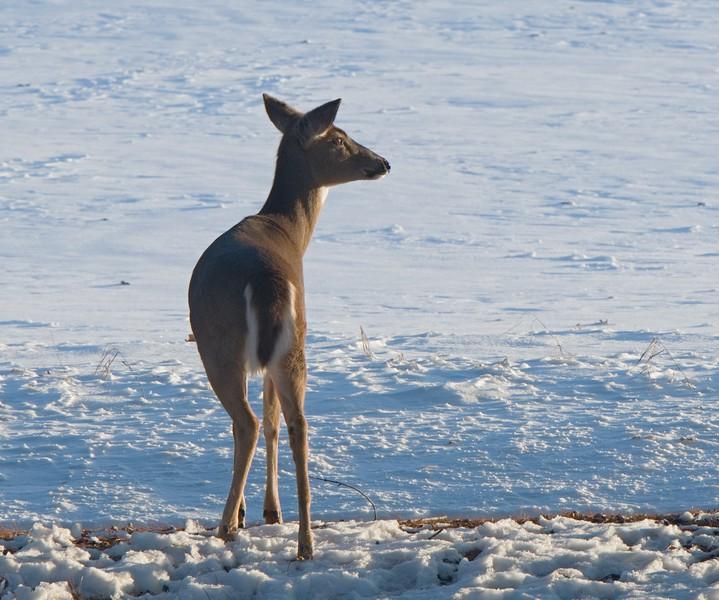 02-21-2020-deer-2.jpg