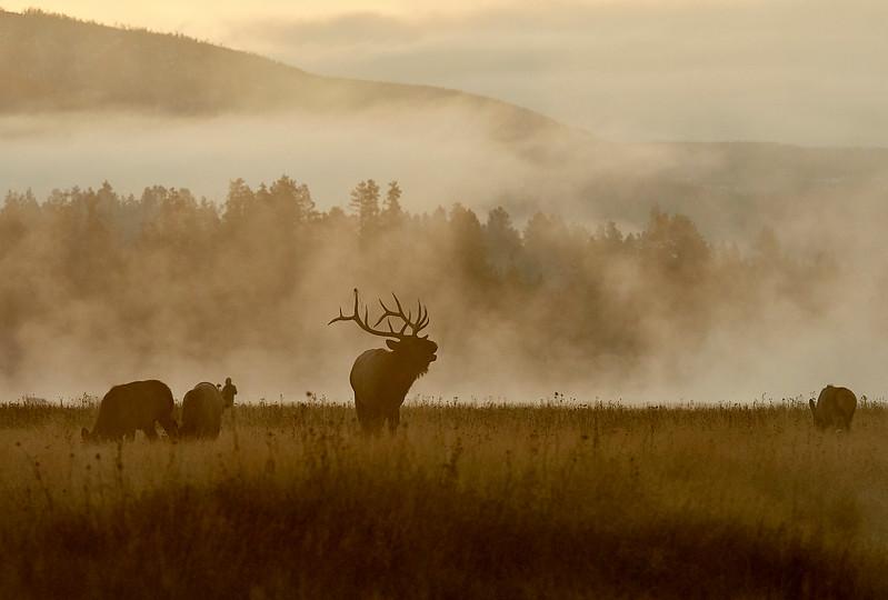 At last, mist and Elk plus a little bit of sun