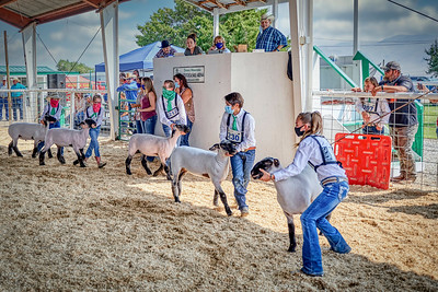 WPJLS Lambs 2