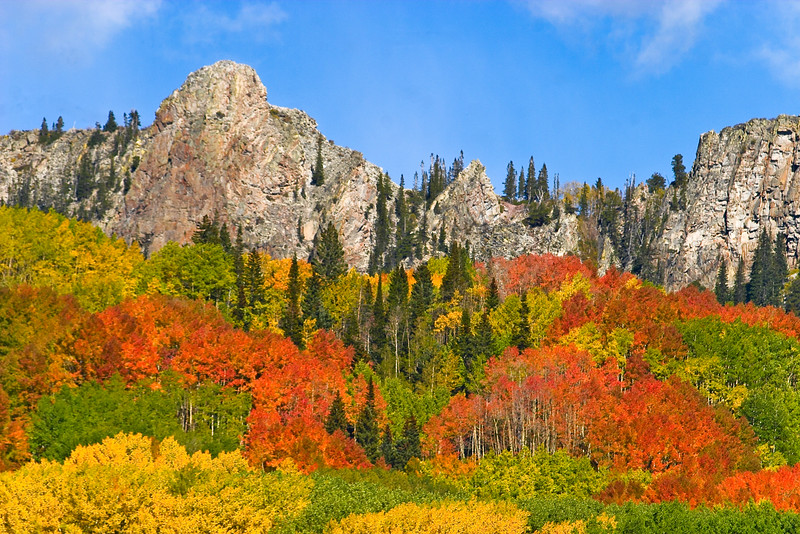 Blazing Aspen grace the flanks of 'The Dyke' off Kebler Pass Road, near Crested Butte, Colorado.