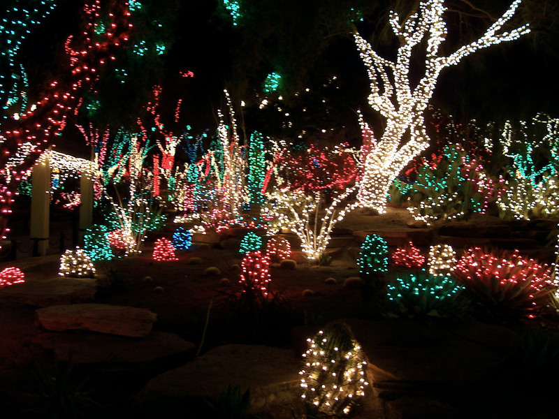 The holiday lights are placed on the cactus plants.